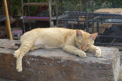 Orange cat is sleeping on the open air Stock Images