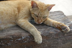 Orange cat is sleeping on the open air Royalty Free Stock Images
