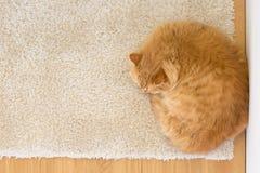 Orange cat sleeping Royalty Free Stock Photography