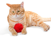 Orange cat and a sphere of red wool Royalty Free Stock Photos