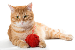 Orange cat and a sphere of red wool Stock Photo