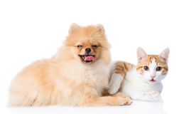 Orange cat and spitz dog together. Royalty Free Stock Photo