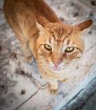 Orange cat walking on the beach in Greece stock photography