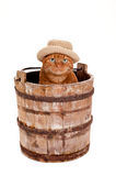 Orange Cat Wearing a Hat and Sitting in a Bucket Stock Photo