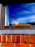 Orange Cat in the windowsill  Royalty Free Stock Photography