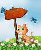 An orange cat with a wooden arrow board Royalty Free Stock Photography