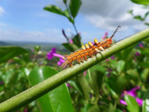 Orange Caterpillar climbing up on the Green Branch against blue sky Stock Images