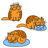 Orange cats emoticons set. Isolated Vector Illustration. Orange cats emoticons set. Funny cartoon cool character. White Color Background. Cheerful Kitten Stock Photo