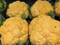 Orange Cauliflower Vegatable Stock Photos