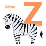 Orange Character Z Word Zebra on Alphabet Card. Orange letter Z with word zebra on alphabet card. Black and white striped horse isolated on white background Stock Photos