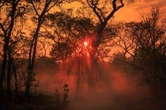 Orange chaud d'un coucher du soleil africain Image stock