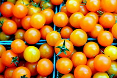 Orange Cherry Tomatoes. Green plastic baskets filled with sweet orange cherry tomatoes provide a tantalizing burst of color at the local grower's market Royalty Free Stock Photos