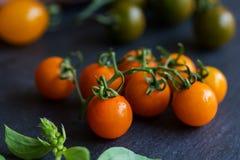 Orange Cherry Tomatoes Royalty Free Stock Image