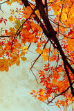 Orange Chestnut Leaves Grungy Background Stock Photography