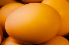 Orange chicken egg Stock Photography