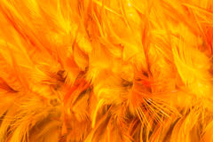 Orange chicken feather background with a soft texture Stock Photos