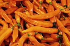 Orange chile. Batch of spicy aji intense orange color stock photo