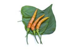 Orange chili pepper Stock Photos