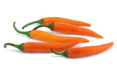 Orange chili pepper royalty free stock photo