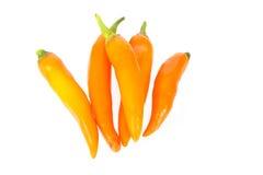 Orange Chili Peppers lizenzfreies stockbild