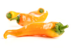 Orange Chilli Royalty Free Stock Photos