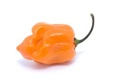 Orange chilli on white Stock Photography