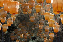 Orange Chinese Lanterns. Chinese lanterns hanging from a tree. They are orange in color and are used for decoration stock image