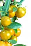 orange chinoise Image stock