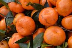 Orange chinoise de miel Photo libre de droits
