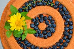Orange chocolate velour cake with flowers, blueberries and basil Stock Images