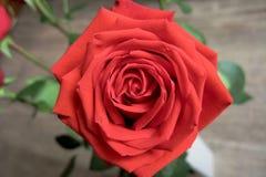 Orange choisissez la vue rose et macro Photographie stock libre de droits