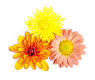 Orange chrysanthemum Stock Images