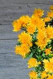 Orange chrysanthemum bouquet closeup on the blurry background Stock Photo