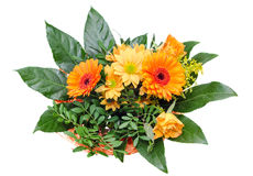 Orange Chrysanthemums flowers, also called mums or chrysanths, floral arrangement, bouquet, close up, isolated, white background Royalty Free Stock Image