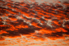 Orange Cirrocumulus clouds Royalty Free Stock Photography
