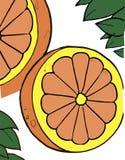 Orange citrus Arkivbild