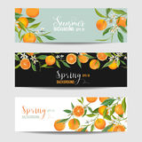 Orange Citrus Floral Banners and Tags Set. In vector Stock Photos