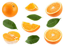 Orange citrus fruit set Stock Image