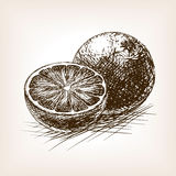 Orange citrus fruit sketch vector illustration Royalty Free Stock Photography