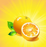 Orange citrus fruit. Vector Royalty Free Stock Photos