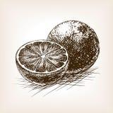 Orange citrusfrukt skissar vektorillustrationen Royaltyfri Fotografi