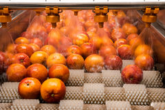Orange cleaning process Stock Photography