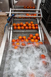 Orange cleaning process Royalty Free Stock Photo