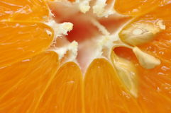 Orange closeup Royalty Free Stock Photo