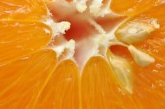 Orange closeup Royalty Free Stock Photo
