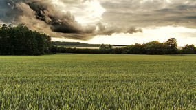 Sunset dark clouds green field Royalty Free Stock Images