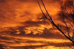 Orange sunset with bare tree stock images