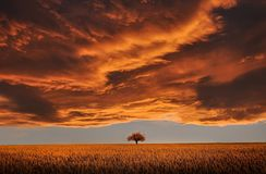 Orange Clouds Tree Field Royalty Free Stock Photography