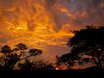 Orange and cloudy sky after the storm , Kruger, South Africa Stock Image