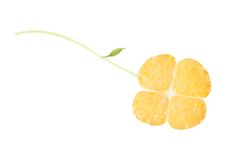 Orange clover. A clover from orange, isolated on white stock photos